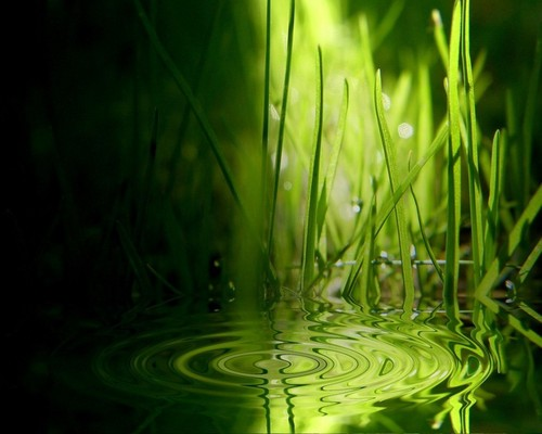 Grass Ripples - green Wallpaper