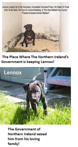 Against Animal Cruelty! wallpaper probably with a chesapeake bay retriever and anime titled Lennox The Victim of BSL!