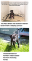 Lennox The Victim of BSL! - against-animal-cruelty photo