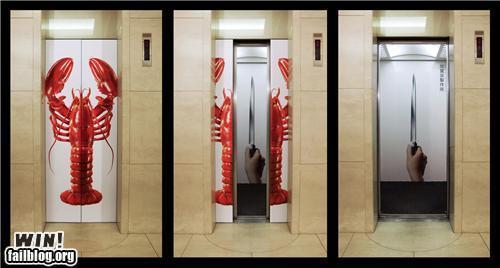 龙虾 elevator win!