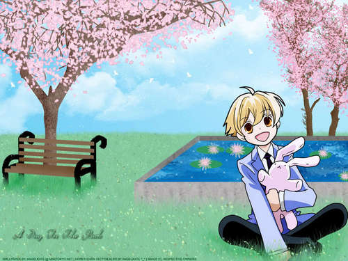 Honey Wallpaper - ouran-high-school-host-club Wallpaper