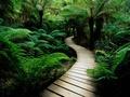 Path Through the Green