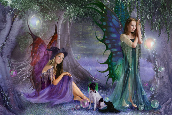 Fairies the magic forest