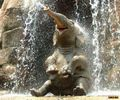 baby elephant - baby-animals photo