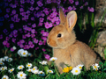bunny - baby-bunnies photo