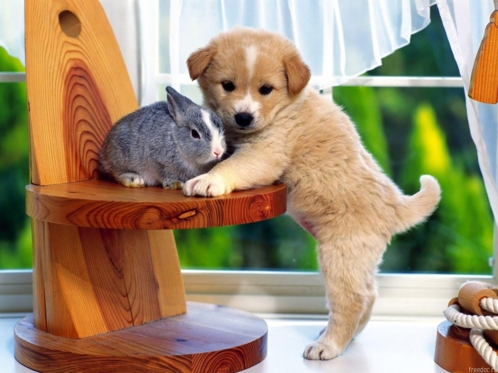 Baby Bunnies bunny with cute little puppy