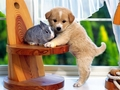 bunny with cute little puppy - baby-bunnies photo