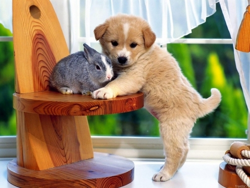 bunny with cute little puppy