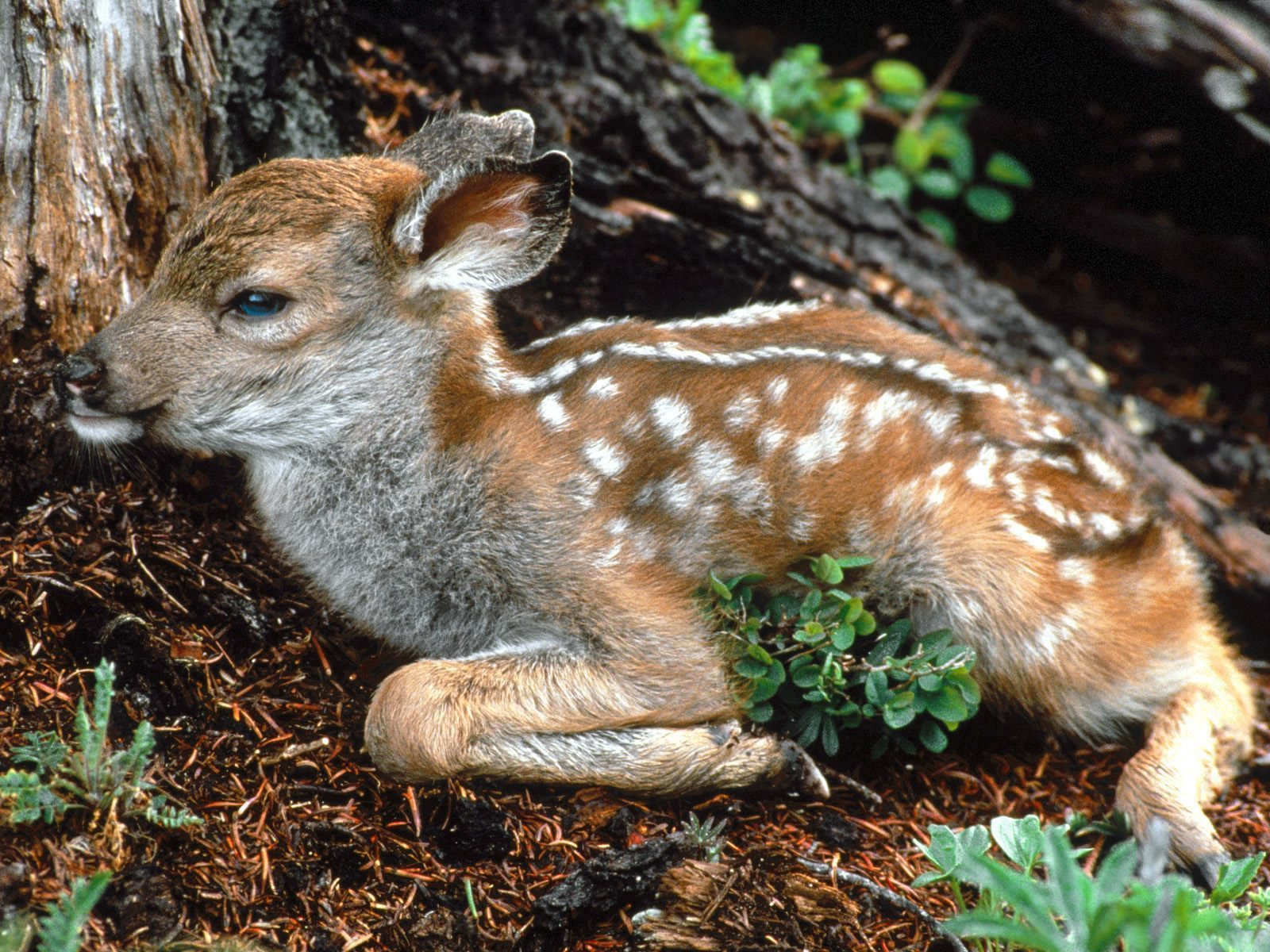 Baby Animals fawn deer