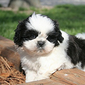 puppies - baby-animals photo