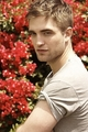 rob with red flower - twilight-series photo