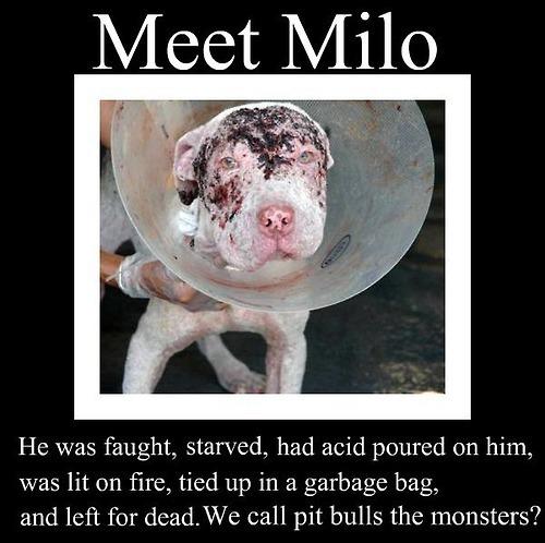Against Animal Cruelty! wallpaper called sad