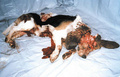 u all nead 2 c this! - against-animal-cruelty photo