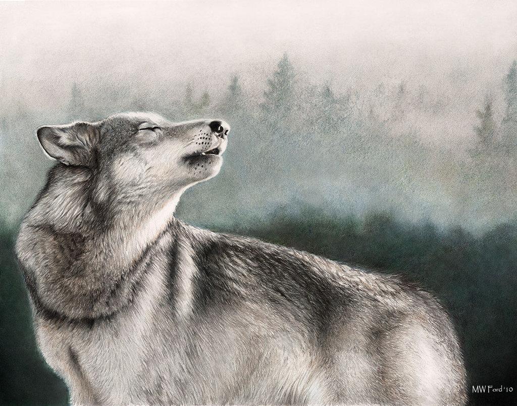 素描全世界动物图片