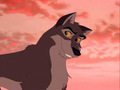 Balto - balto photo