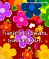 Friendship Flowers - bright-colors photo