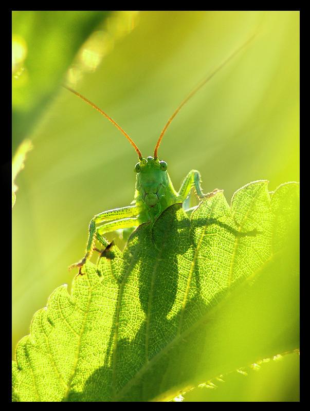 Green Bugs!