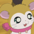 Hamtaro - hamtaro photo