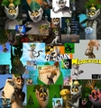 King Julien Collage