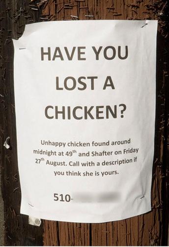 হারিয়ে গেছে & Found Pet Signs