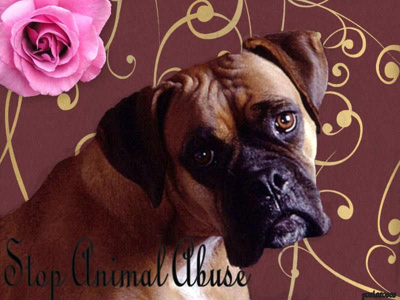 Stop Animal Abuse !