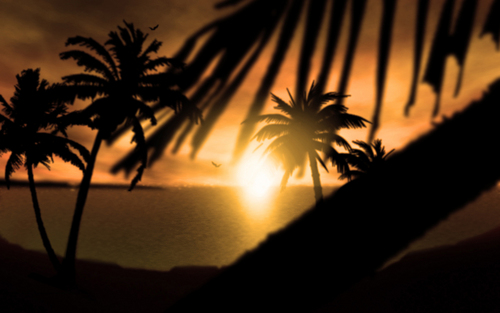 Sunsets and Sunrises wallpaper containing a royal palm called SunSet