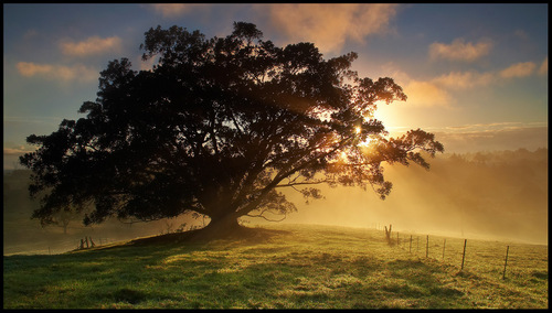 Sunsets and Sunrises wallpaper with a sunset, a beech, and a live oak titled SunSet