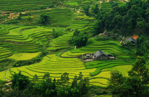 Terraces in Vietnam