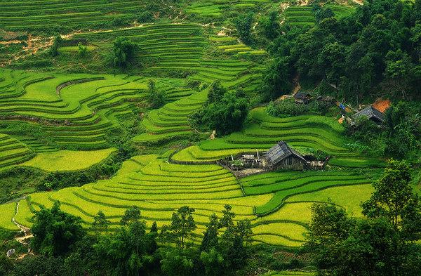 Vietnamese Placesminakimngan Images Terraces In Vietnam Wallpaper