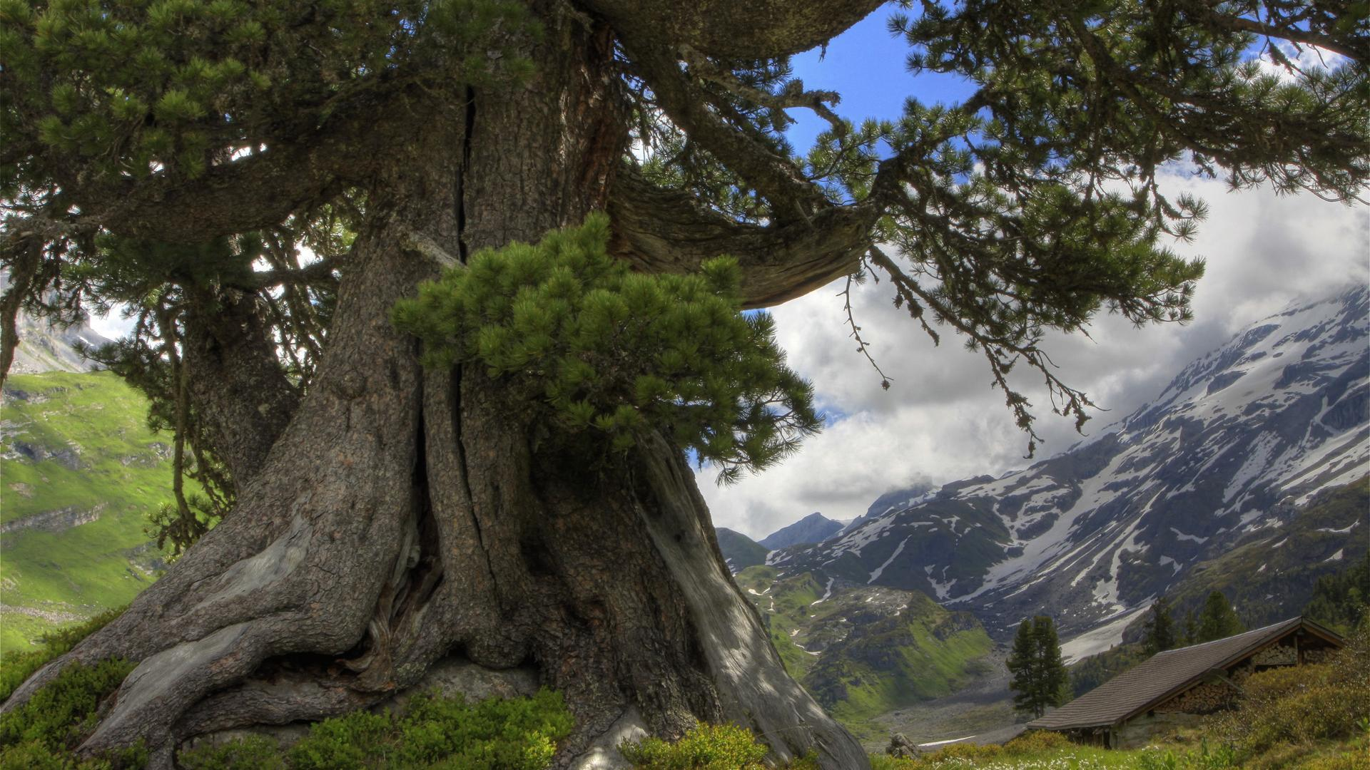 tree hd wallpapers - photo #18
