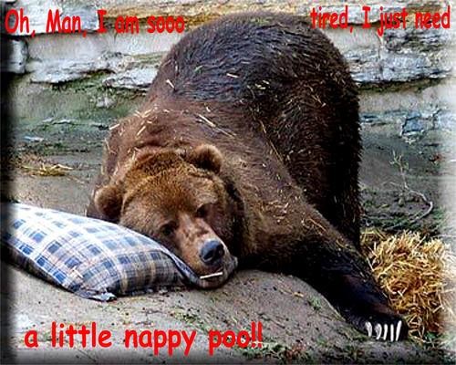 bear funny