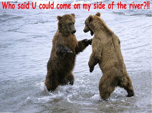 chịu, gấu funny
