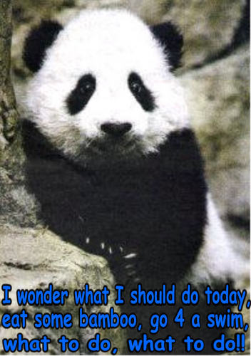 Animal Humor wallpaper possibly with a giant panda titled bear funny