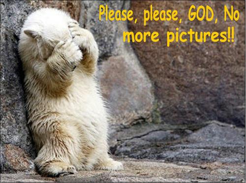 beruang funny