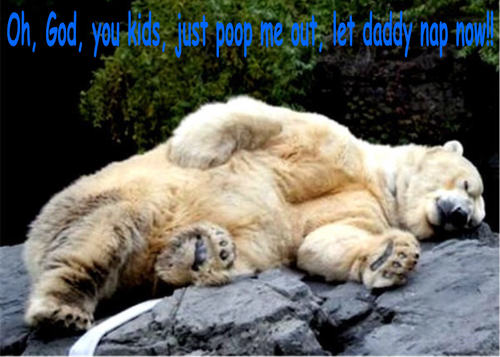 медведь funny