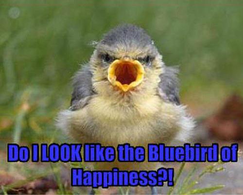 bird funny