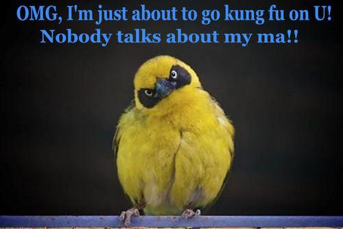 Animal Humor wallpaper probably with a weaver called bird funny