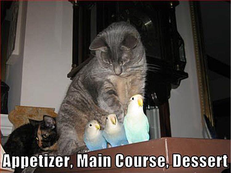 cat amp; bird funny  Animal Humor Photo 19948695  Fanpop