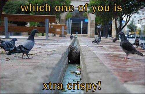 cat & bird funny
