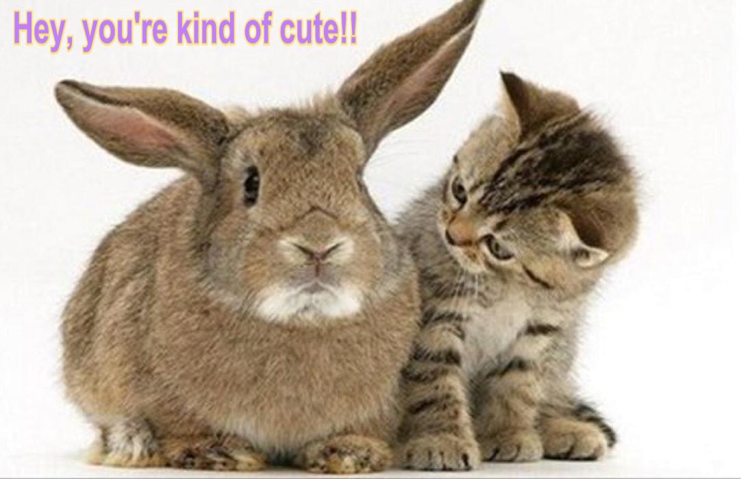 cat & bunny funny
