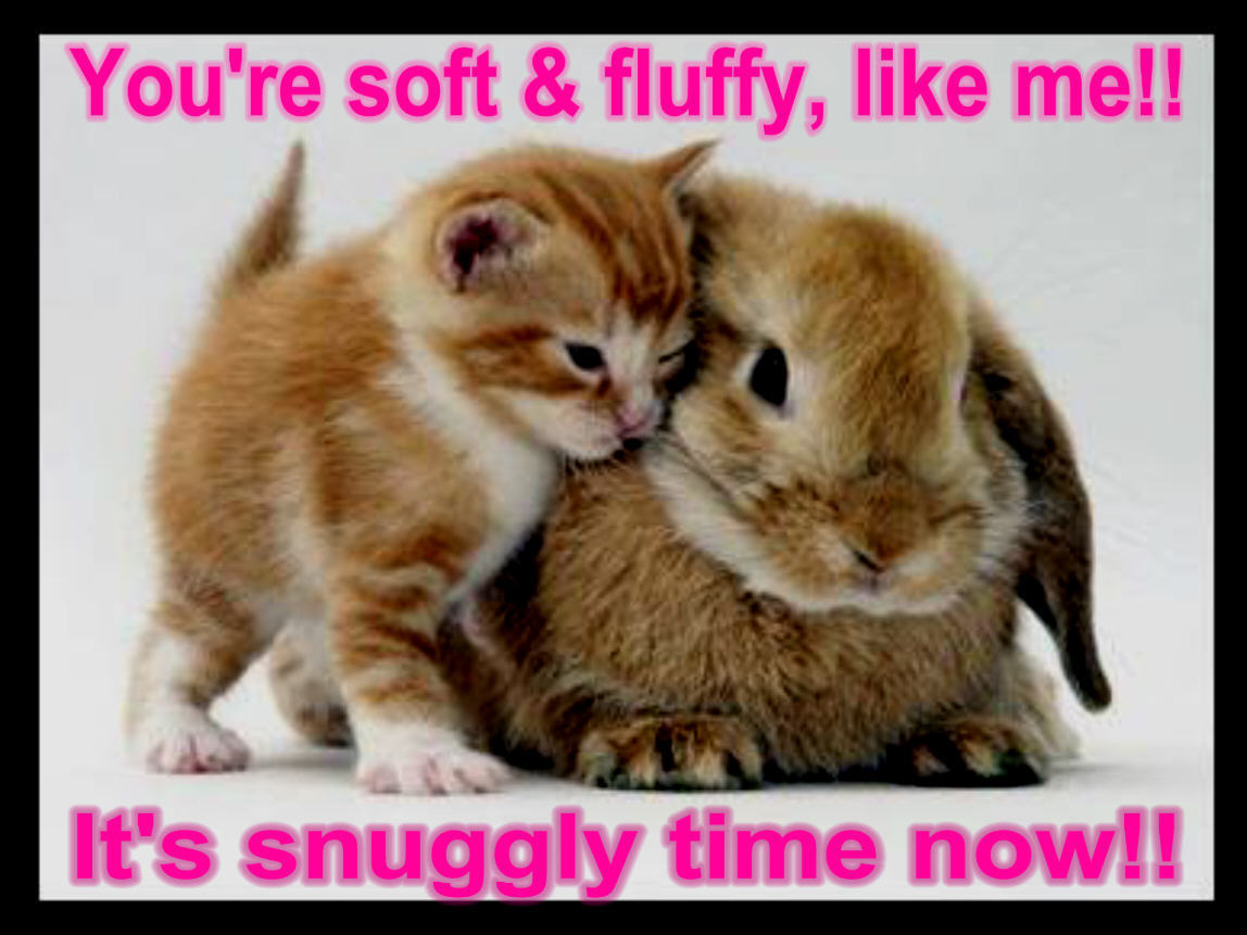 Animal Humor cat & bunny funny