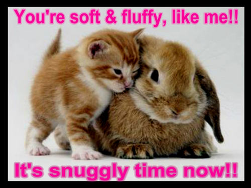 Animal Humor wallpaper titled cat & bunny funny