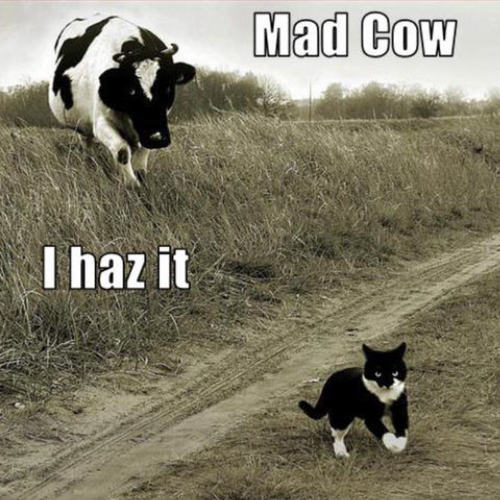 cat & cow funny