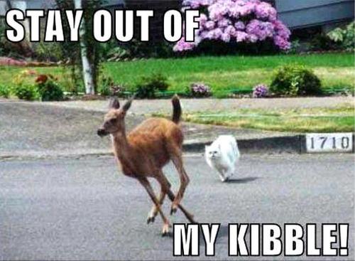 cat & deer funny
