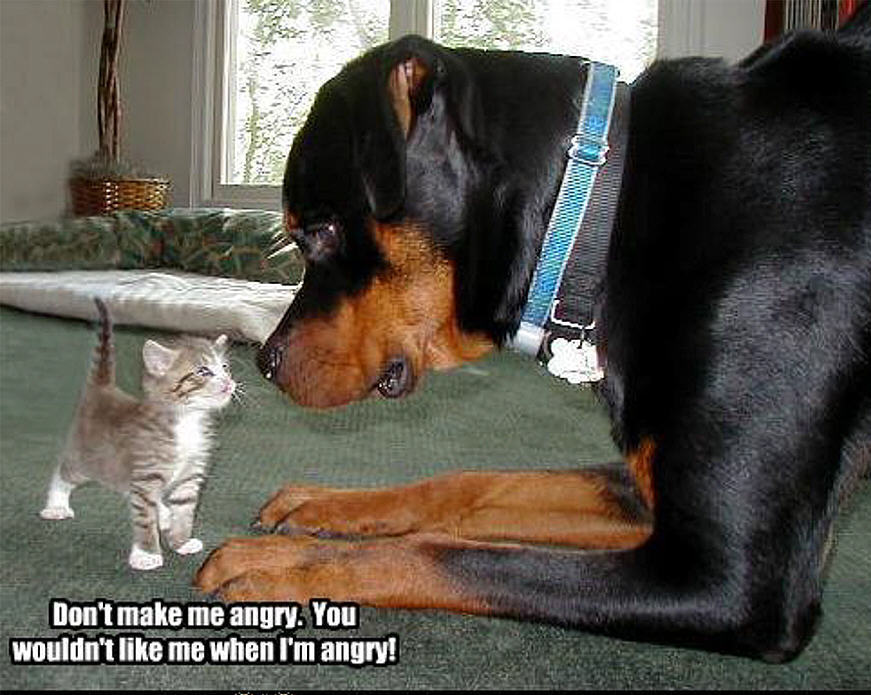 Animal Humor Cat Dog Funny