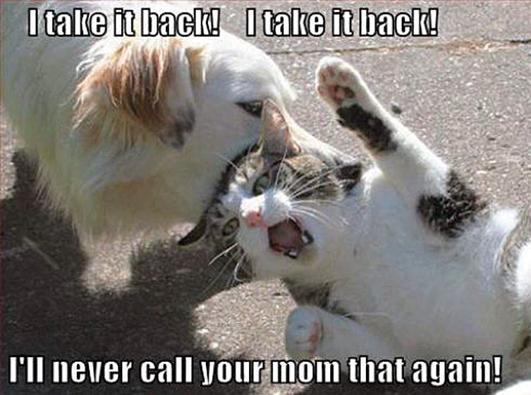 Funny Dogs and Cats Jokes