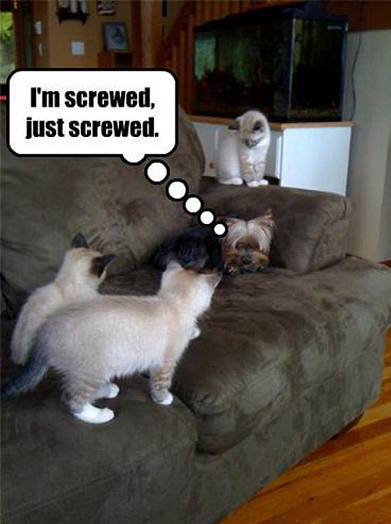 Posts Cat Dog Funny Animal Humor Photo Fanpop Fanclubs