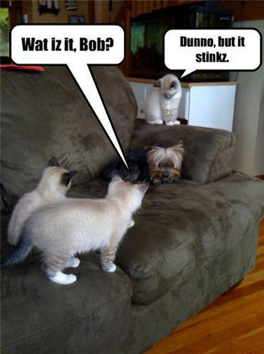 Funny dog and cat pictures with words