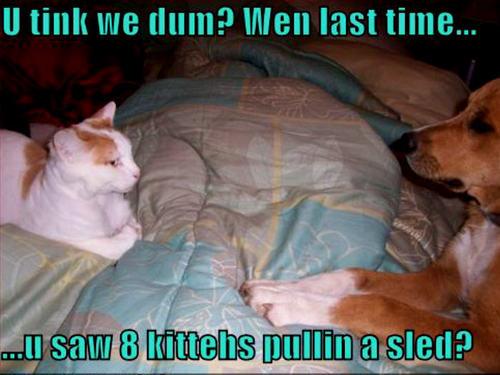 cat & dog funny