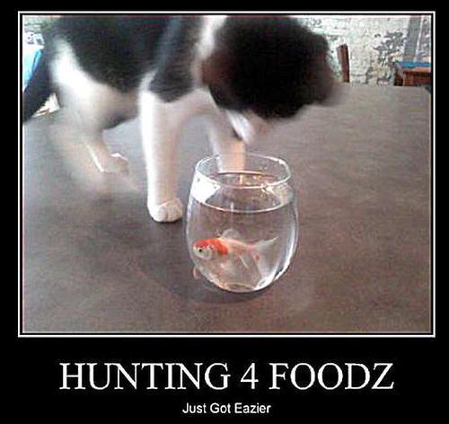 cat & ikan funny